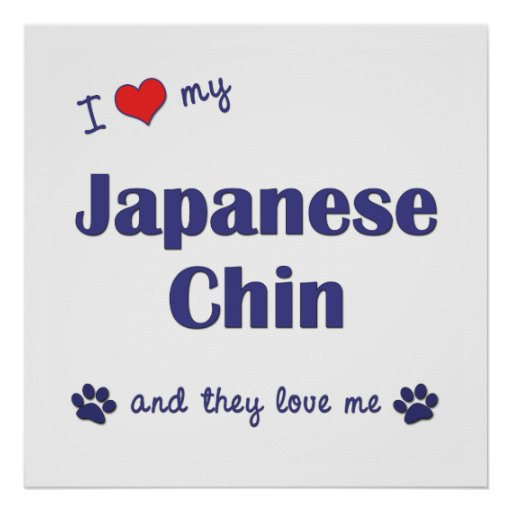 I Love My Japanese Chin (Multiple Dogs) Posters