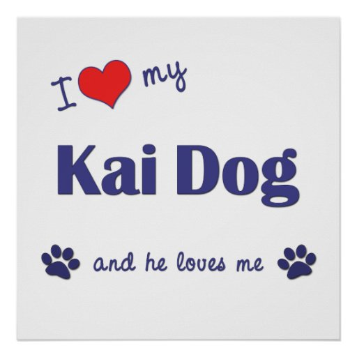 I Love My Kai Dog (Male Dog) Posters