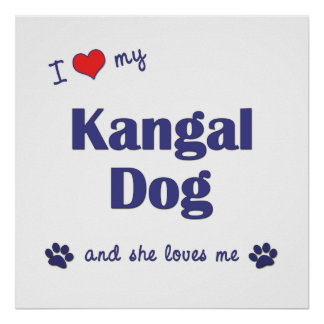 I Love My Kangal Dog (Female Dog) Posters