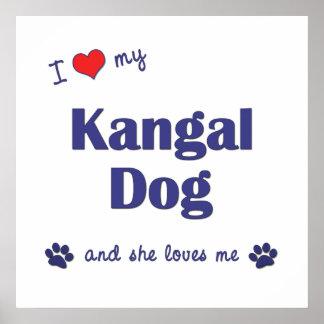 I Love My Kangal Dog Female Dog Posters