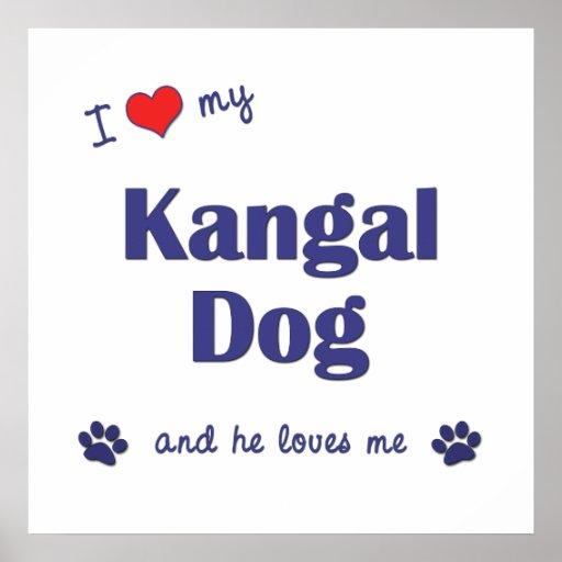 I Love My Kangal Dog (Male Dog) Print