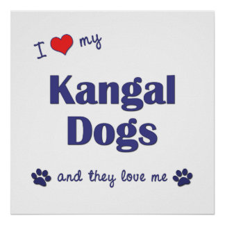I Love My Kangal Dogs Multiple Dogs Poster