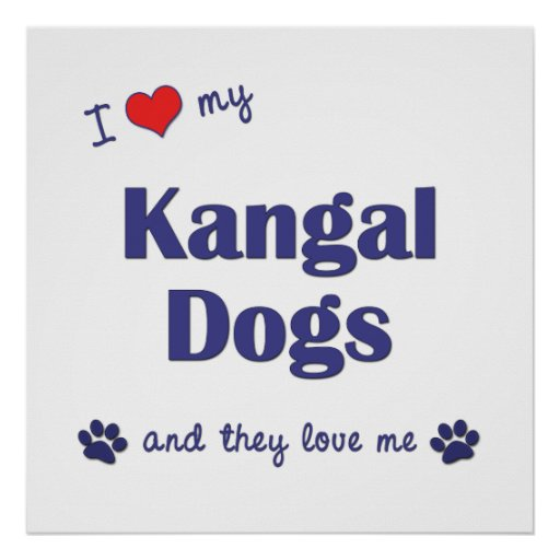 I Love My Kangal Dogs (Multiple Dogs) Poster