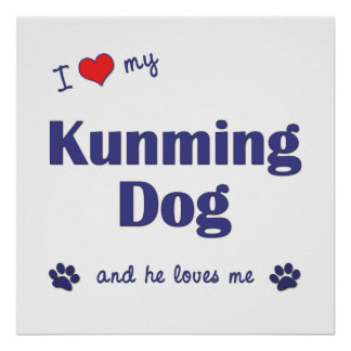 I Love My Kunming Dog Male Dog Posters