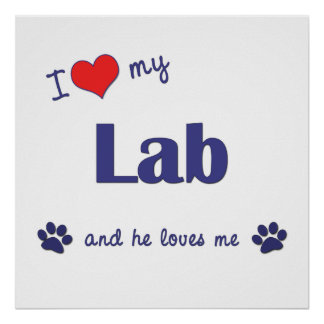 I Love My Lab Male Dog Poster