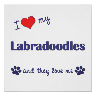 I Love My Labradoodles (Multi Dogs) Poster Print