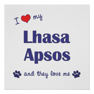 I Love My Lhasa Apsos (Multiple Dogs) Poster