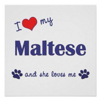 I Love My Maltese (Female Dog) Poster