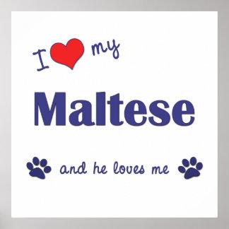 I Love My Maltese Male Dog Print