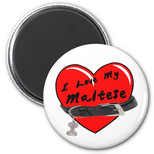 I Love My Maltese Red Heart with Dog Collar Magnets