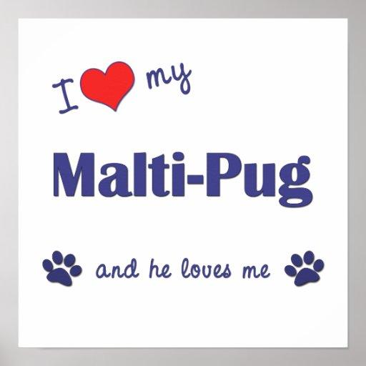 I Love My Malti-Pug (Male Dog) Poster