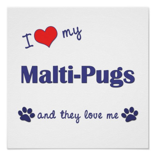 I Love My Malti-Pugs (Multiple Dogs) Posters