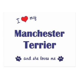 I Love My Manchester Terrier (Female Dog) Postcard