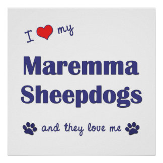 I Love My Maremma Sheepdogs (Multiple Dogs) Poster