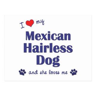 I Love My Mexican Hairless Dog (Female Dog) Postcard