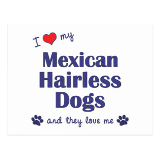 I Love My Mexican Hairless Dogs (Multiple Dogs) Postcard