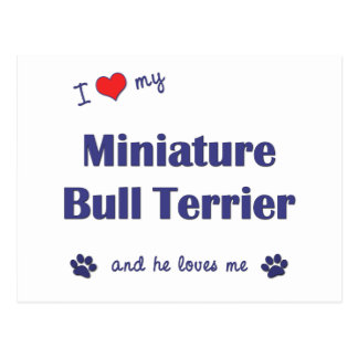 I Love My Miniature Bull Terrier Male Dog Post Cards