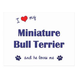 I Love My Miniature Bull Terrier (Male Dog) Postcard