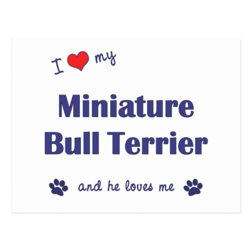 I Love My Miniature Bull Terrier (Male Dog) Post Cards