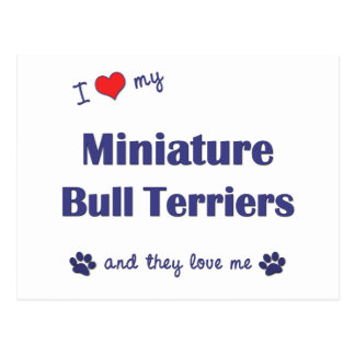 I Love My Miniature Bull Terriers (Multiple Dogs) Postcard