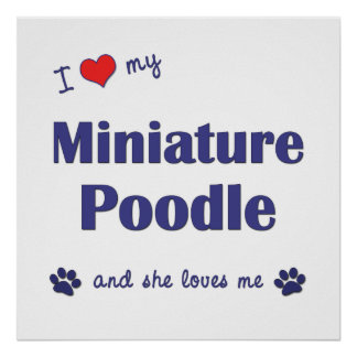 I Love My Miniature Poodle (Female Dog) Posters