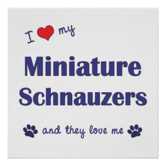 I Love My Miniature Schnauzers (Multiple Dogs) Posters