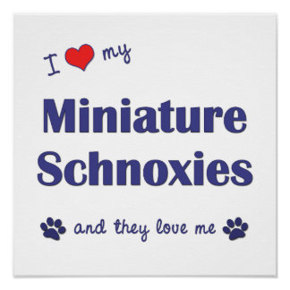 I Love My Miniature Schnoxies (Multi Dogs) Poster