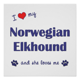 I Love My Norwegian Elkhound (Female Dog) Poster