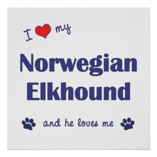 I Love My Norwegian Elkhound Male Dog Poster