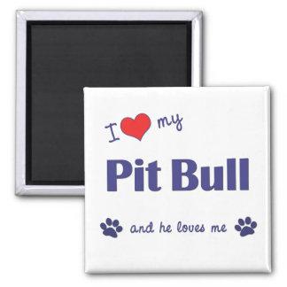 I Love My Pit Bull (Male Dog) Square Magnet