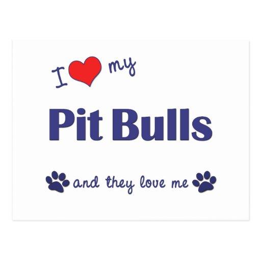 I Love My Pit Bulls (Multiple Dogs) Postcards