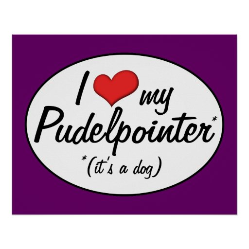 I Love My Pudelpointer (It's a Dog) Poster