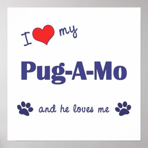 I Love My Pug-A-Mo (Male Dog) Posters