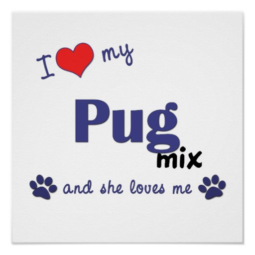 I Love My Pug Mix (Female Dog) Poster Print