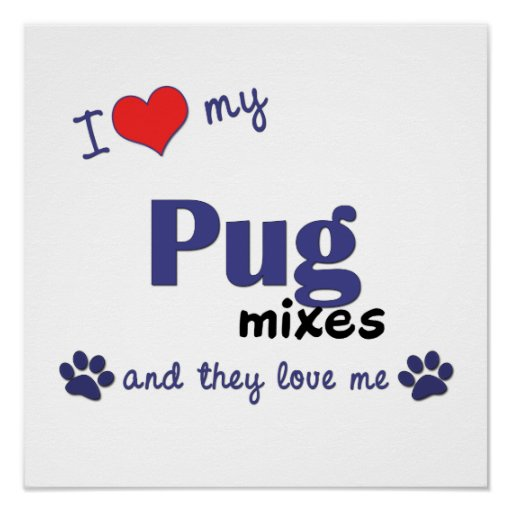 I Love My Pug Mixes (Multiple Dogs) Poster Print