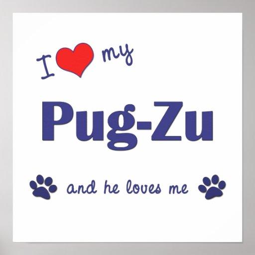 I Love My Pug-Zu (Male Dog) Posters