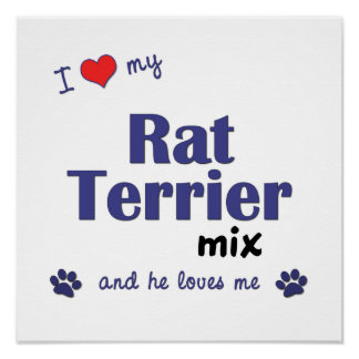 I Love My Rat Terrier Mix (Male Dog) Poster