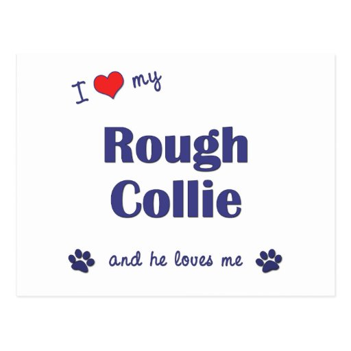 I Love My Rough Collie (Male Dog) Post Cards