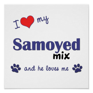 I Love My Samoyed Mix (Male Dog) Poster Print