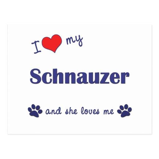 I Love My Schnauzer (Female Dog) Post Card