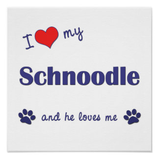 I Love My Schnoodle (Male Dog) Poster Print