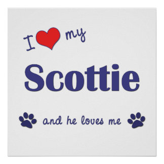 I Love My Scottie (Male Dog) Poster