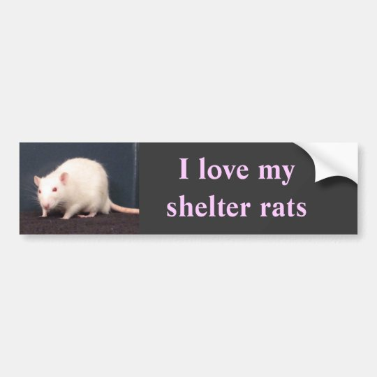 I love my shelter rats bumper sticker