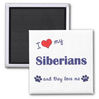 I Love My Siberians (Multiple Cats) Magnet