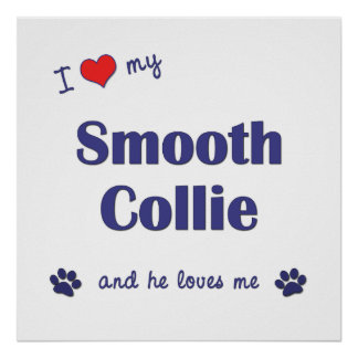 I Love My Smooth Collie Male Dog Posters