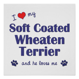 I Love My Soft Coated Wheaten Terrier (Male Dog) Poster