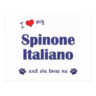 I Love My Spinone Italiano (Female Dog) Postcard