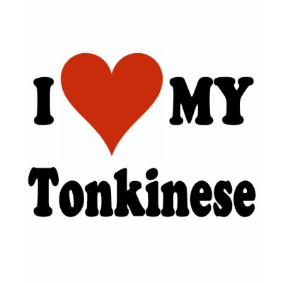 For Cat Lovers everywhere - get these great ... Tonkinese Breeders.