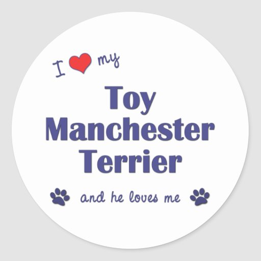 I Love My Toy Manchester Terrier (Male Dog) Stickers