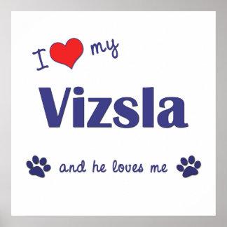 I Love My Vizsla (Male Dog) Posters